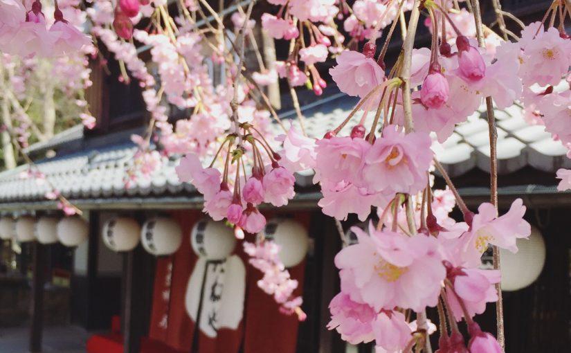 滋賀・八幡堀の桜🌸